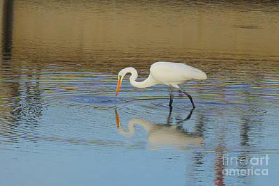 Photograph - Great Egret -ardea Alba by Scott Cameron