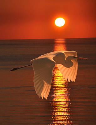 Mixed Media - Great Egret At Sunset by Eric Kempson