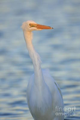 Photograph - Great Egret In Waves by John F Tsumas