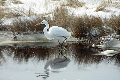 Photograph - Great Egret by Captain Debbie Ritter