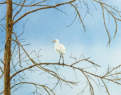 Painting - Great Egret by Carol Hanna