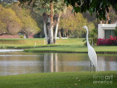 Photograph - Great Egret by Chris Tarpening