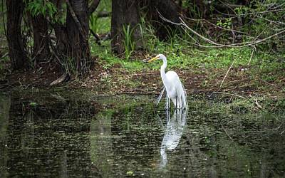 Photograph - Great Egret by Framing Places
