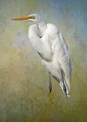Photograph - Great Egret by HH Photography of Florida