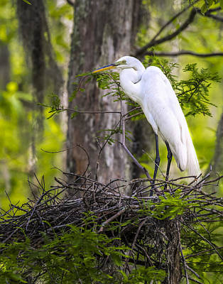 Photograph - Great Egret In A Nest by Andy Crawford