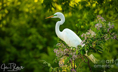 Photograph - Great Egret In Flowers by John Roberts
