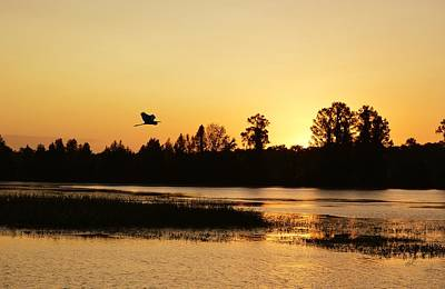 Photograph - Great Egret In The Glow Of Sunrise by rd Erickson