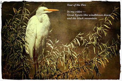 Haiku Wall Art - Digital Art - Great Egret by John Williams