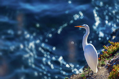 Photograph - Great Egret by Jonathan Nguyen