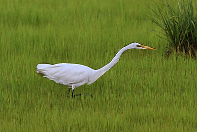 Photograph - Great Egret by Ken Stampfer