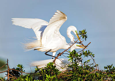 Photograph - Great Egret Love by Fran Gallogly