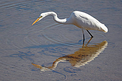 Photograph - Great Egret Mx-1 by Diana Douglass