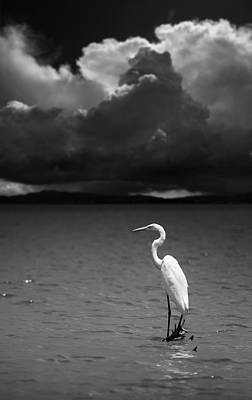 Photograph - Great Egret On Lake Henshaw by William Dunigan