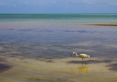 Bob Wade Photograph - Great Egret On Vast Horizon by Bob Slitzan