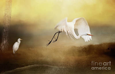 Photograph - Great Egret by Pam  Holdsworth