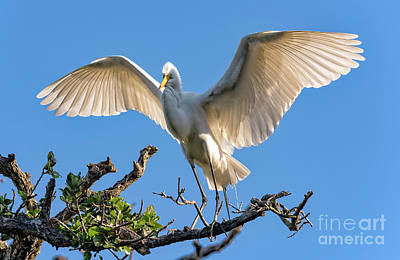 Photograph - Perfect Landing by Bill And Deb Hayes
