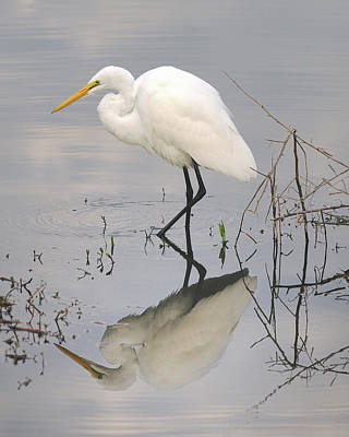 Great Egret Reflected Art Print by Brian Grant