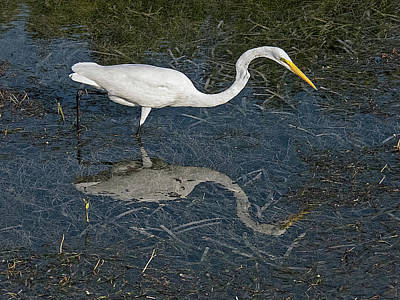 Photograph - Great Egret Reflection by Bob Slitzan