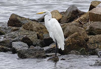 Great Egret Print by Sandy Keeton