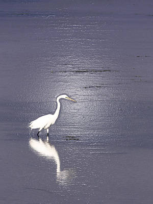 Photograph - Great Egret by Steven Sparks