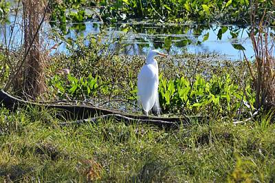 Photograph - Great Egret by Warren Thompson