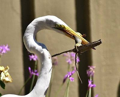 Alligator Lizards Photograph - Great Egret With Lizard Who Is Holding Onto Wood by Linda Brody