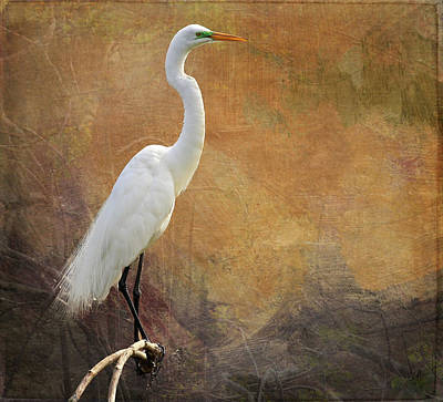Photograph - Great Egret With Texture by Judy Vincent
