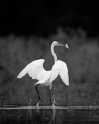 Photograph - Great Egret With Two Fish by Jeff Phillippi