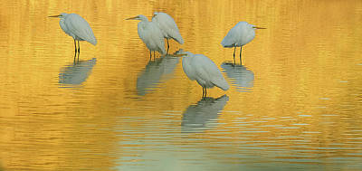 Photograph - Great Egrets 5005-112813-4cr by Tam Ryan