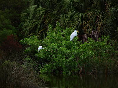 Photograph - Great Egrets by James Granberry
