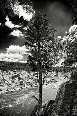 Photograph - Great Falls Tree by Paul Seymour