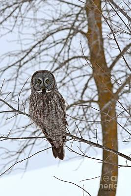 Photograph - Great Gray Owl Your News And Weather At 11 by Heather King
