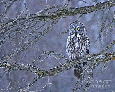 Photograph - Great Gray Winter Wonderland by Heather King