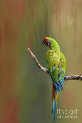 Photograph - Great Green Macaw by Eva Lechner