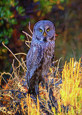 Photograph - Great Grey Owl Impressions by Greg Norrell