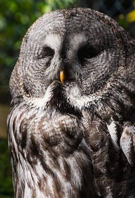 Priska Wettstein Pink Hues - Great Grey Owl by Jeff Townsend
