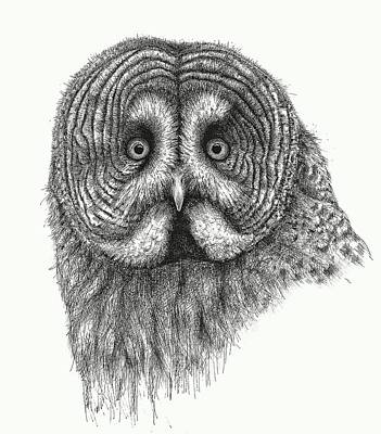 Stipple Owl Drawing - Great Grey Owl by Riina Maido