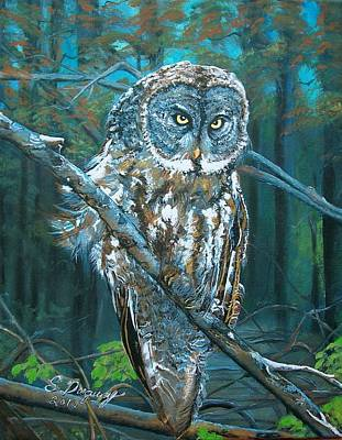 Great Grey Owl Original by Sharon Duguay