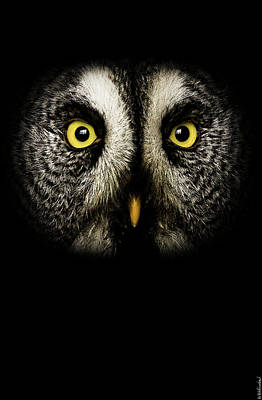 Photograph - Great Grey Owl Up Close by Weston Westmoreland