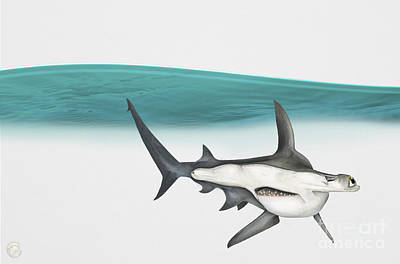 Painting - Great Hammerhead Sphyrna Mokarran - Squat-headed Hammerhead Shark - Grand Requin-marteau - Cornuda by Urft Valley Art