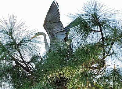 Great Heron Photograph - Great Heron Flight To Nest by Wayne Nielsen