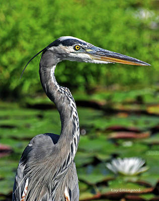 Photograph - Great Heron by Kay Lovingood