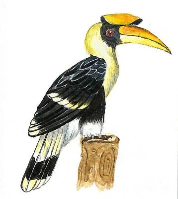 Hornbill Painting - Great Hornbill by Ketki Fadnis