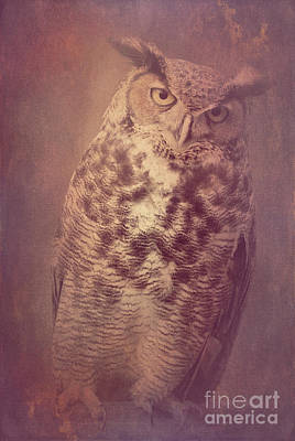 Photograph - Great Horned Owl 5 by Chris Scroggins
