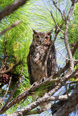 Photograph - Great Horned Owl by Arthur Dodd
