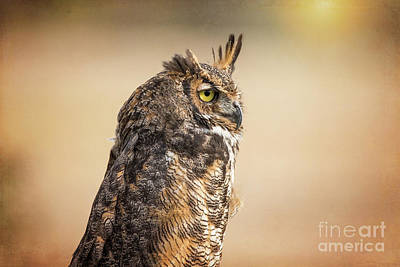 Photograph - Great Horned Owl At Dusk by Sharon McConnell