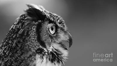 Photograph - Great Horned Owl Black And White by Joshua McCullough