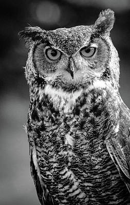 Photograph - Great Horned Owl Bw IIi by Athena Mckinzie