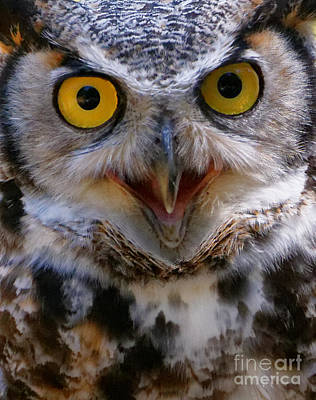Photograph - Great Horned Owl Closeup by Sue Harper