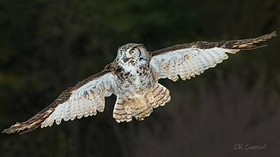 Photograph - Great Horned Owl by CR  Courson